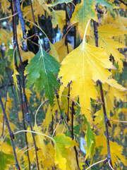 Botanischer Garten der Universität Wien - 22.10.12