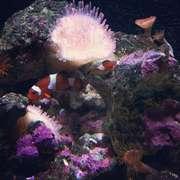 Haus des Meeres Aqua Terra Zoo Wien - 13.09.12